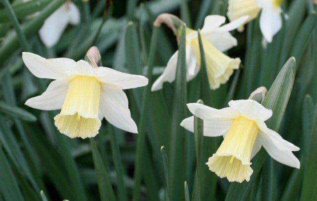 White Empress 1W-W (M) 40/60cm  Per single bulb